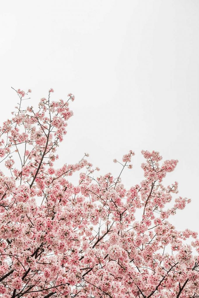 blossom tree florist