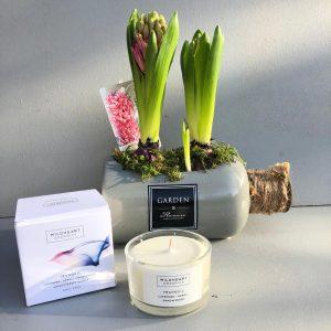 Seasonal Plant and Aromatherapy Candle